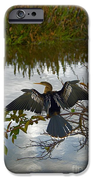 Anhinga IPhone 6s Case by Mark Newman