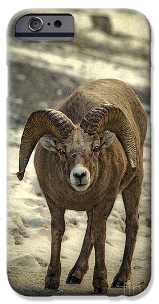 Rocky Mountain Bighorn Sheep iPhone 6s Case - A Close Encounter by Evelina Kremsdorf