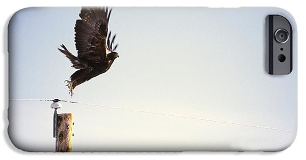 Falcon iPhone 6s Case - A Falcon Takes To The Air by Heath Korvola