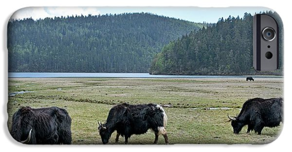 A Herd Of Yaks In Potatso National Park IPhone 6s Case