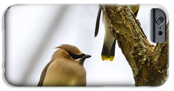 IPhone 6s Case featuring the photograph A Pair Of Cedar Waxwings by Ricky L Jones