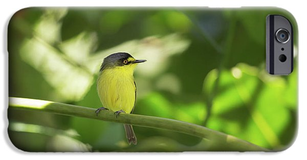 A Yellow-lored Tody Flycatcher IPhone 6s Case