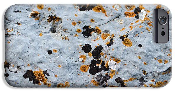 Abstract Orange Lichen 1 IPhone 6s Case by Chase Taylor