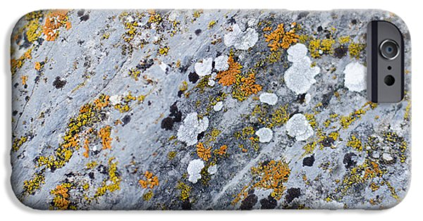Abstract Orange Lichen 2 IPhone 6s Case by Chase Taylor
