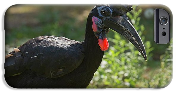 Abyssinian Ground Hornbill IPhone 6s Case