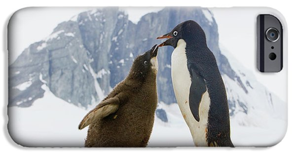 Adelie Penguin Chick Begging For Food IPhone 6s Case by Yva Momatiuk John Eastcott