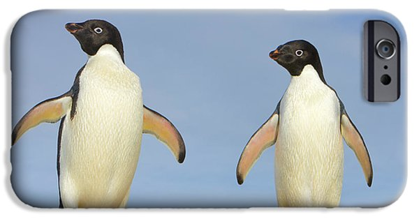 Adelie Penguin Duo IPhone 6s Case by Yva Momatiuk John Eastcott
