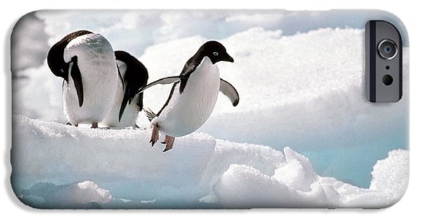 Adelie Penguins IPhone 6s Case by Art Wolfe