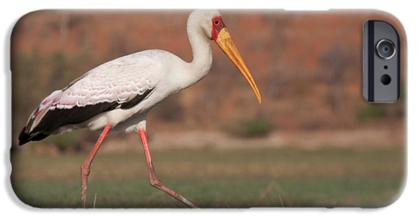 Africa, Botswana, Chobe National Park IPhone 6s Case by Jaynes Gallery