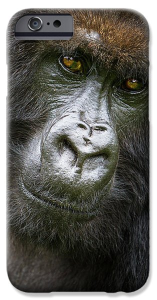 Africa Rwanda Female Mountain Gorilla IPhone 6s Case by Ralph H. Bendjebar