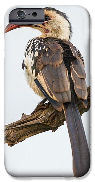 Africa Tanzania Red-billed Hornbill IPhone 6s Case