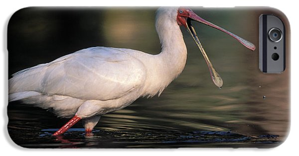 African Spoonbill IPhone 6s Case by Nigel Dennis