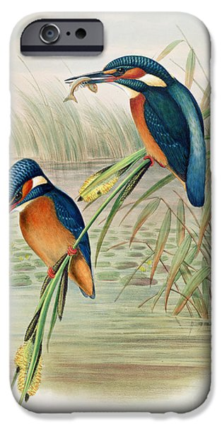 Alcedo Ispida Plate From The Birds Of Great Britain By John Gould IPhone 6s Case by John Gould William Hart