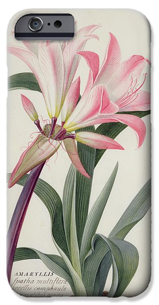 Lily iPhone 6s Case - Amaryllis Belladonna, 1761 by Georg Dionysius Ehret