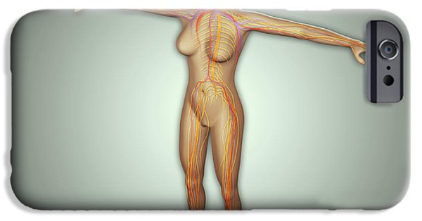 Anatomy Of Female Body With Arteries IPhone Case by Stocktrek Images
