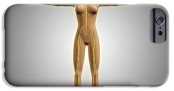 Anatomy Of Female Body With Nervous IPhone Case by Stocktrek Images
