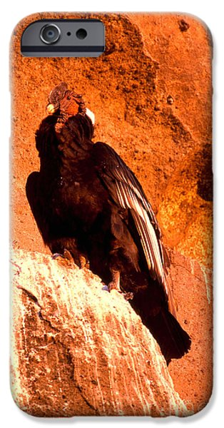 Andean Condor IPhone 6s Case by Art Wolfe