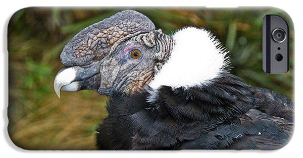 Andean Condor IPhone 6s Case