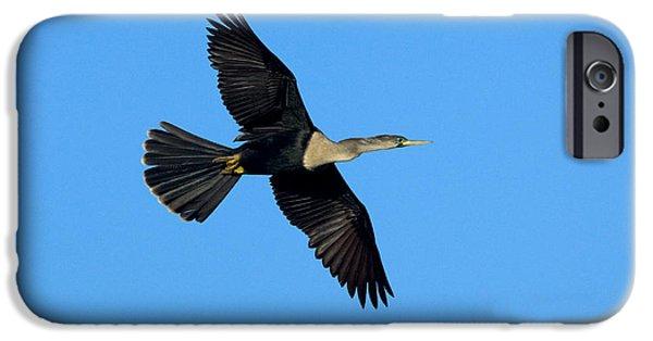 Anhinga Female Flying IPhone 6s Case by Anthony Mercieca