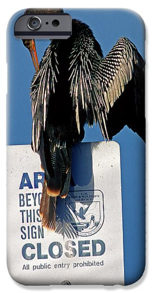 Anhinga Perched On A Signpost IPhone 6s Case