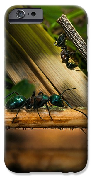 Ants Adventure 2 IPhone 6s Case by Bob Orsillo