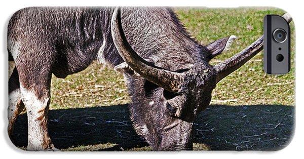 Asian Water Buffalo  IPhone 6s Case
