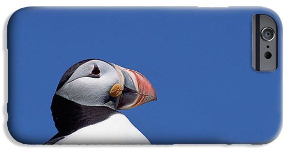 Atlantic Puffin In Breeding Colors IPhone 6s Case by Yva Momatiuk and John Eastcott