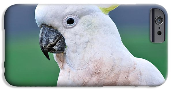 Australian Birds - Cockatoo IPhone 6s Case by Kaye Menner