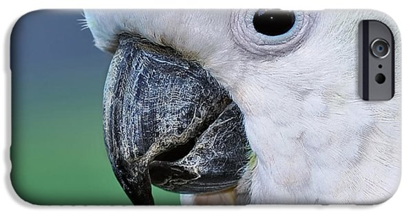 Australian Birds - Cockatoo Up Close IPhone 6s Case by Kaye Menner