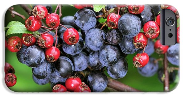 Blue Berry iPhone 6s Case - Autumn Berries by Colin Varndell/science Photo Library