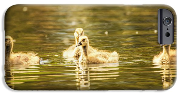 Gosling iPhone 6s Case - Baby Geese On The Water by Bill Tiepelman