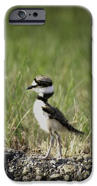 Baby Killdeer 2 IPhone 6s Case by Thomas Young