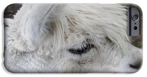 Baby Llama IPhone 6s Case by Ellen Henneke