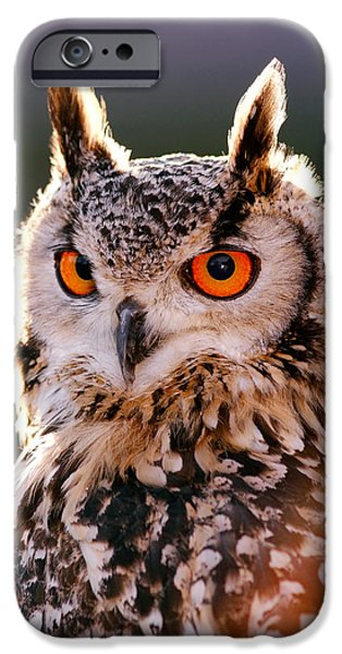 Backlit Eagle Owl IPhone 6s Case by Roeselien Raimond