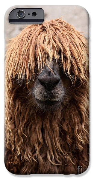 Bad Hair Day IPhone 6s Case by James Brunker