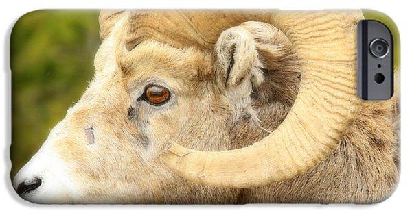 Rocky Mountain Bighorn Sheep iPhone 6s Case - Banff Bighorn by Stephen Stookey