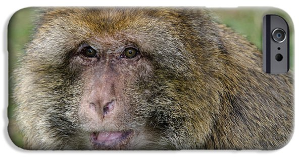 Barbary Macaque IPhone 6s Case by Nigel Downer