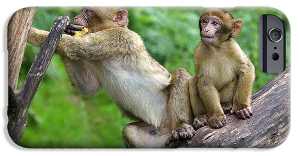 Barbary Macaques IPhone 6s Case by Nigel Downer