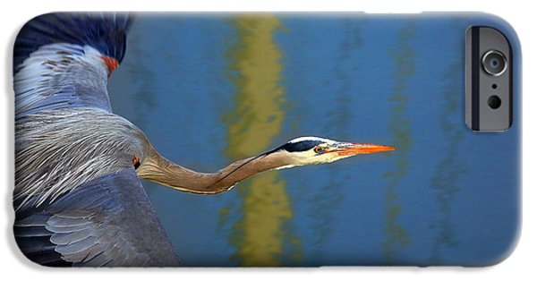 Bay Blue Heron Flight IPhone 6s Case by Robert Bynum