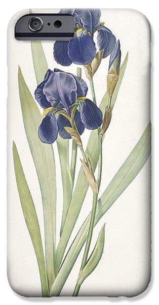 Bearded Iris IPhone 6s Case by Pierre Joseph Redoute