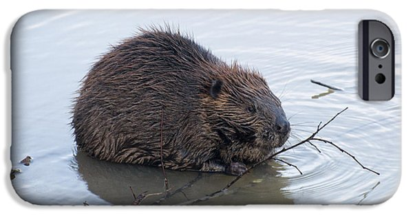 Beaver Chewing On Twig IPhone 6s Case