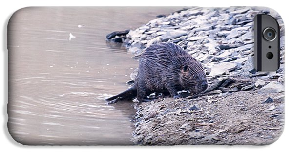 Beaver On Dry Land IPhone 6s Case