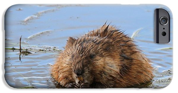 Beaver Portrait IPhone 6s Case