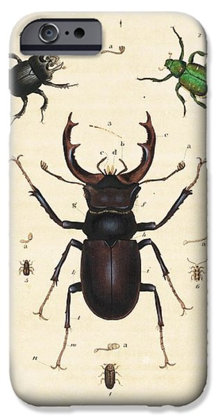 Beetles IPhone 6s Case by King's College London