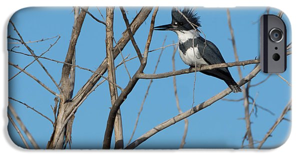 Belted Kingfisher 4 IPhone 6s Case by Ernie Echols
