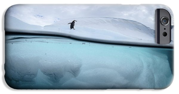Penguin iPhone 6s Case - Between Two Worlds - Facing Change by Justin Hofman