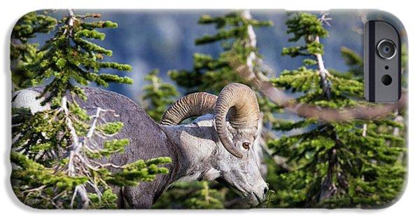 Rocky Mountain Bighorn Sheep iPhone 6s Case - Bighorn Sheep, Glacier National Park by Yitzi Kessock