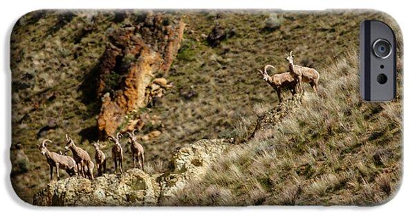 Rocky Mountain Bighorn Sheep iPhone 6s Case - Bighorn Sheep by Robert Bales