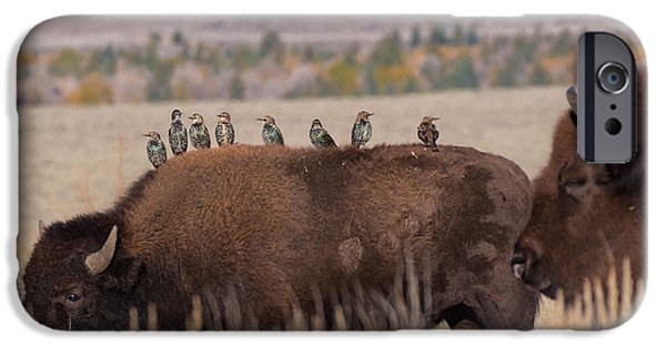 Bison And Buddies IPhone 6s Case