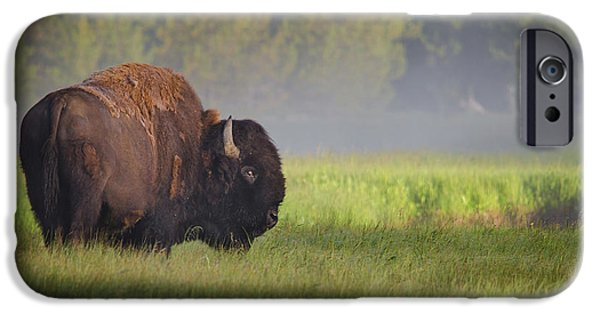 Bison In Morning Light IPhone 6s Case